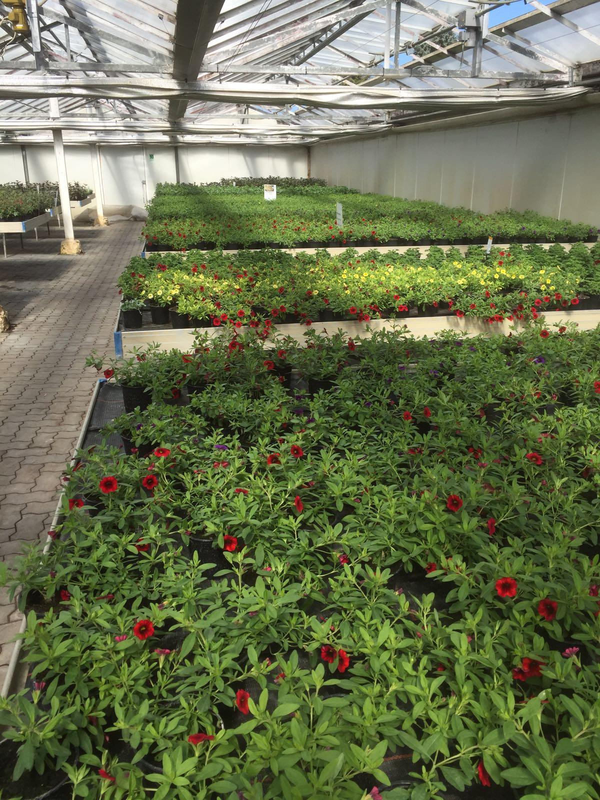 Gärtnerei bei Wismar
